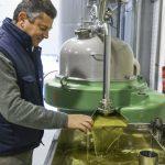 O azeite alentejano que Itália adora e faz chegar ao mundo inteiro