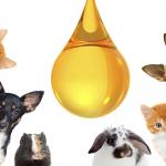 Aposte no azeite no cuidado do seu animal de estimação