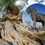 Herdade de Maria da Guarda teria madeira de oliveirasuficiente para construir vários cavalos de Tróia