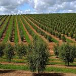 Agricultura intensiva defende biodiversidade e é amiga da natureza