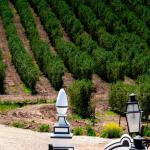 Estudo internacional considera olival a cultura mais amiga do ambiente