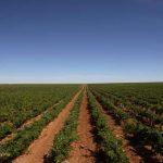 Herdade de Maria da Guarda patrocina investigação de Smart Farming