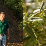 Próxima campanha de azeite dará alegrias aos produtores